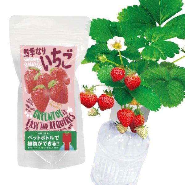 画像1: 【NEW】グリーントイ 四季なりいちご (1)